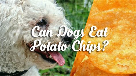 can dogs eat potato chips can dogs eat potato chips pet consider