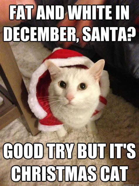 Christmas Cat Meme - christmas cat memes quickmeme