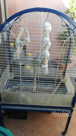 pappagallo in gabbia gabbia pappagallo posot class