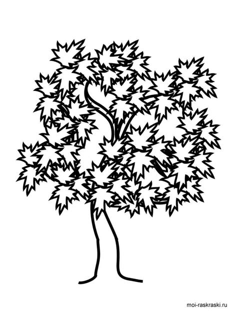 coloring pages maple leaves maple tree coloring pages for kids free printable maple