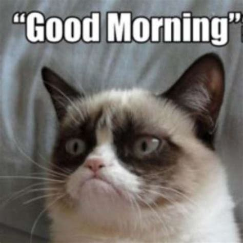 Angry Cat Meme Good - grumpy morning quotes quotesgram
