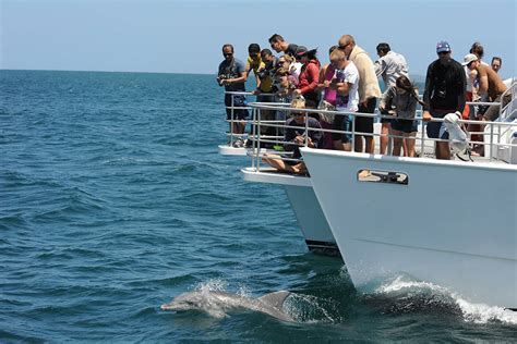 public boat rs jervis bay dolphin eco tour jervis bay wild huskisson dolphin cruises