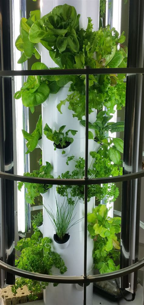 tower garden leafy greens grown indoors