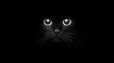 cat nose whiskers x уютненькая х