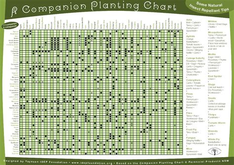companion plants and reviving dead soil (permaculture