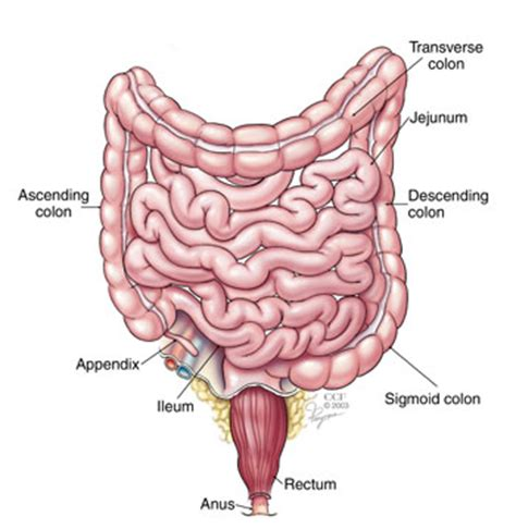 causes of rectal bleeding blood in stool cleveland