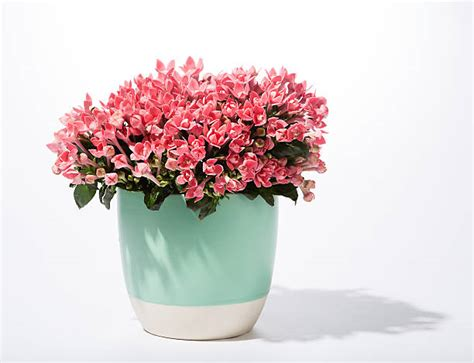 images of 6 flowers in pots royalty free flower pot pictures images and stock photos istock