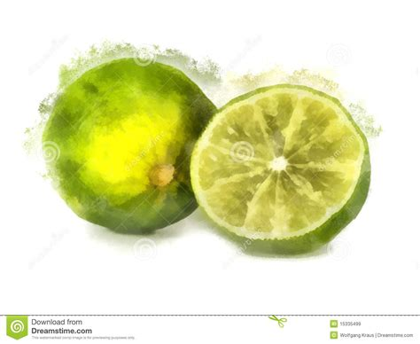 Lime Watercolor Painting Royalty Free Stock Images   Image: 15335499
