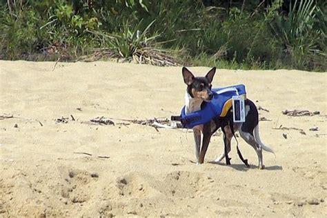 dog boat life jackets life jackets for dogs boatus magazine