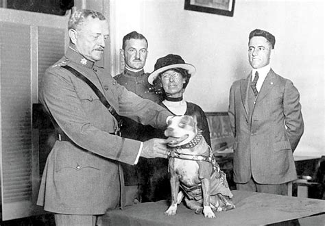 Sergeant Stubby History Sergeant Stubby The Original Of War Sofrep