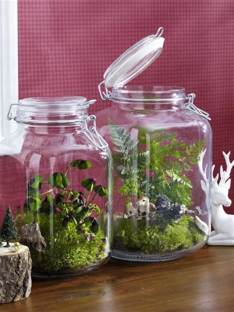 Pflanze Im Geschlossenen Glas by Herbstdeko Inspiration For The Home Gl 228 Ser