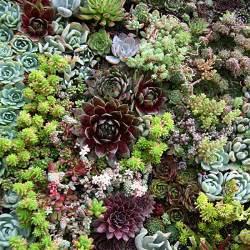 Vertical Succulent Gardens Succulent Wall How To Make Vertical Succulent Gardens