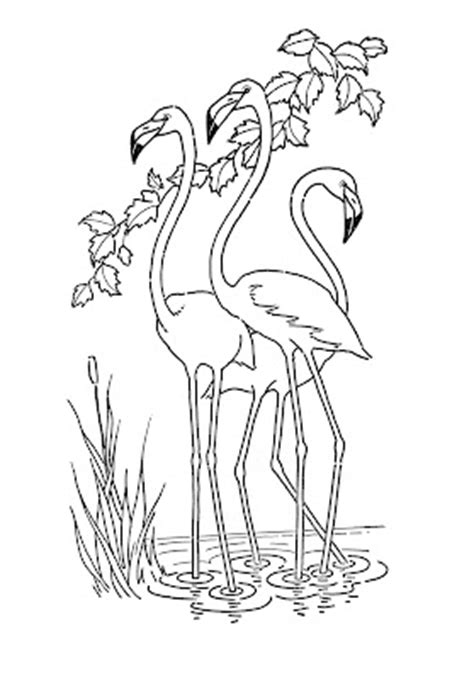 Kids Printable - Flamingo - Coloring Page - The Graphics Fairy