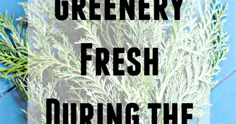 how to prevent christmas tree from drying out how to prevent fresh greenery from drying out fresh trees greenery wreath