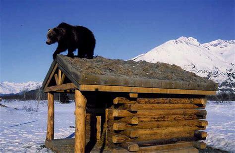 Ak Search Alaska Wildlife Images Search