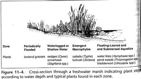 ecology  food webs  wetlands