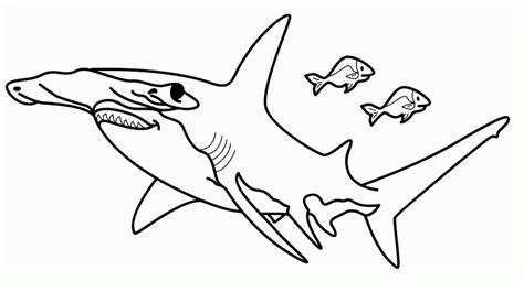 imagenes para colorear tiburon tiburon martillo para colorear imagui
