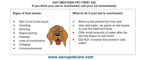 how to your pet prevent overheating weather tips to keep your pet cool