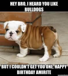 Bulldog Meme - bulldog puppy meme memes