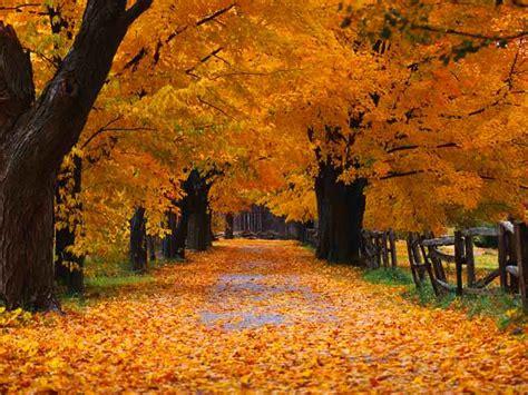 Happy Garden Fall River Ma - nowy dzień nowa nadzieja bloog pl