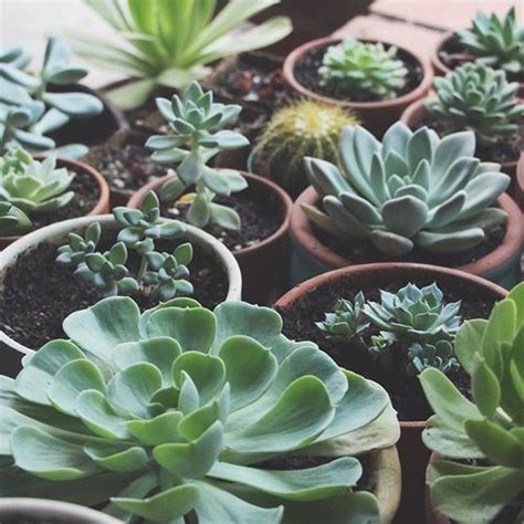 low light succulents tips for growing healthy succulents we you are and the