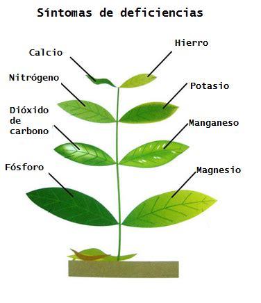 149407 Enfermedades De Las Plantas Cultivadas Libros by Los Nutrientes Que Necesitan Las Plantas Huerto O