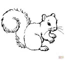 desenho esquilo cinzento colorir desenhos colorir imprimir gratis