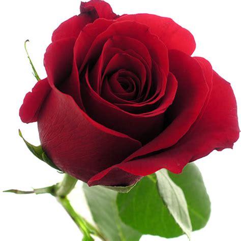 imagenes de uñas flores enviar rosas forever young rosas a domicilio