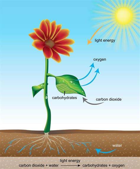 carbohydrates for class 7 nutrients in plants learn biology class 7 amrita