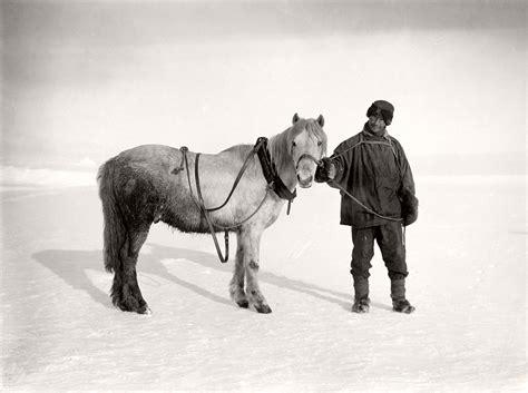 the south pole ponies biography pioneer antarctic photographer herbert g