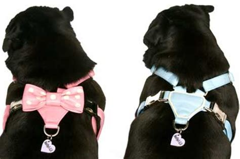 pug harness uk bow harnessessmall or medium for pugsmade to order 135