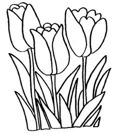 free printable tulip coloring pages for