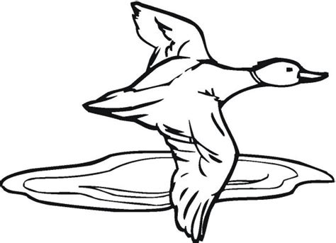 duck hunting coloring pages clipart best