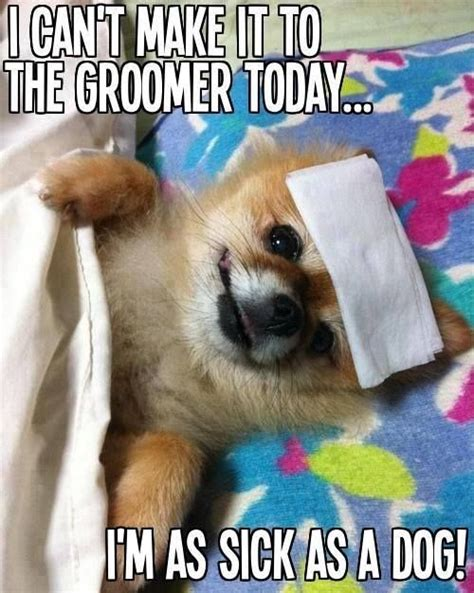 Dog Groomer Meme - 60 best cute pet memes and quotes images on pinterest doggies dogs and pet memes