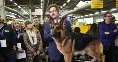 westminster show on tv westminster kennel club show buzz for named rumor ny daily news