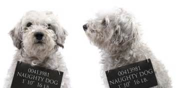 dogs bad for you what your s bad behavior says about you