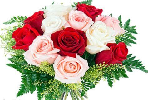 Imagenes De Rosas Blancas Y Rojas Animadas | imagenes de rosas rojas animadas imagen de rosas rojas