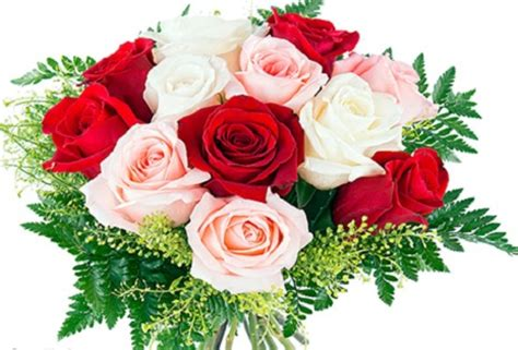 imagenes rosas animadas imagenes de rosas rojas animadas imagen de rosas rojas