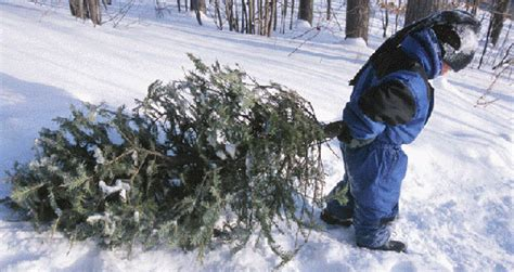 christmas tree farms where in wyoming to find choose and