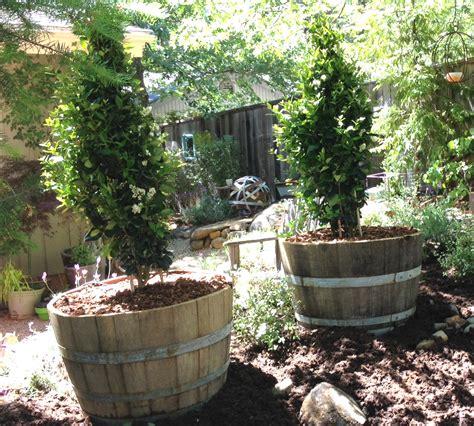 half wine barrels planting 101