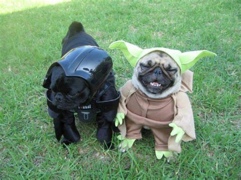 pug costumes battle pug quotes