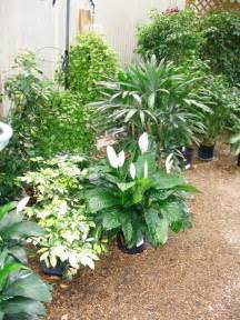 Winter Patio Plants Tips To Prepare Outdoor Plants For Winter Inside
