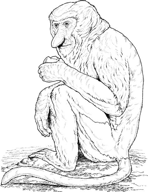 marmoset monkey coloring page primate coloring pages