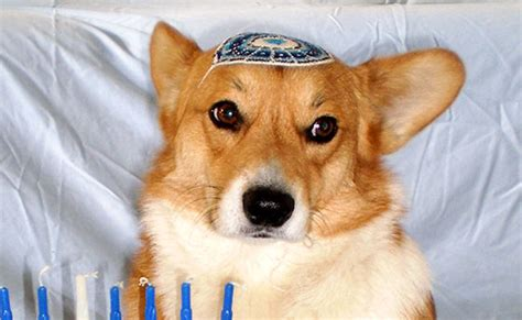 kosher dogs kosher jlife