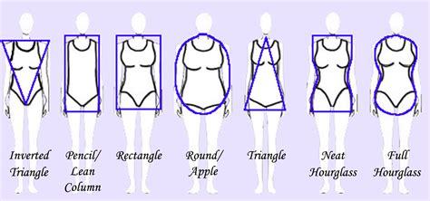 body types and shapes body type mind body evolved