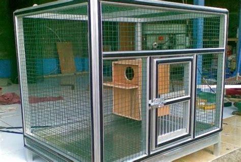 Kandang Kucing Gelap cara mudah merawat budidaya menangkarkan burung