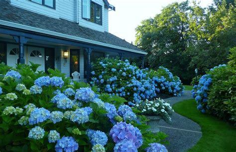 Kitchen Remodling Ideas a blue garden traditional landscape vancouver