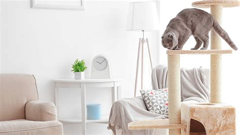 cat furniture   chic pet owner house tipster