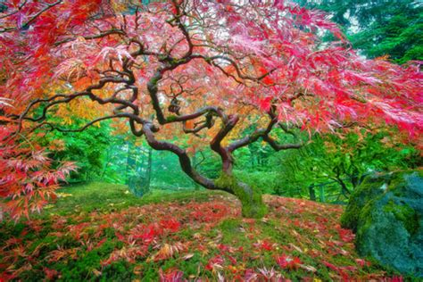 these trees are the most stunning feats of nature you will see today absolutely gorgeous wow