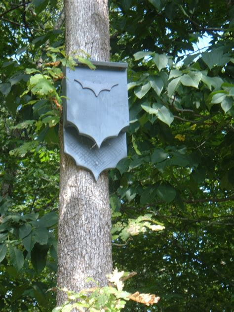 buy or build a house buy or build a bat house to attract garden pest control